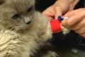 Exkursion in die Tierarztpraxis